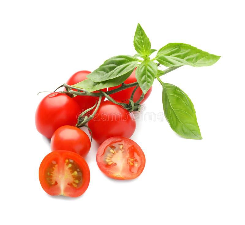 Tomates maduros frescos com as folhas da manjericão no fundo branco fotos de stock