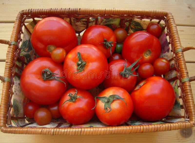 Tomates maduros na cesta na tabela imagem de stock