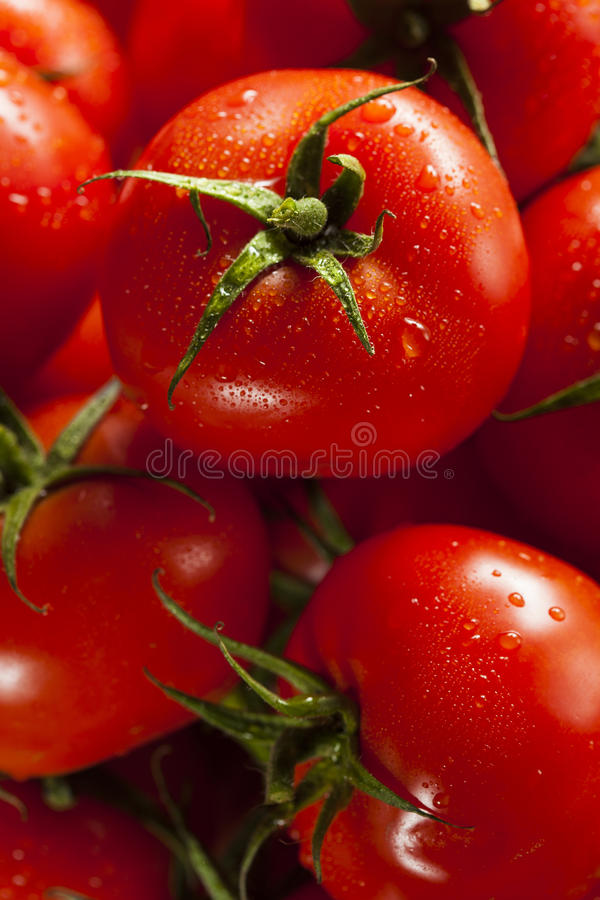 Tomates maduros rojos orgánicos fotos de archivo