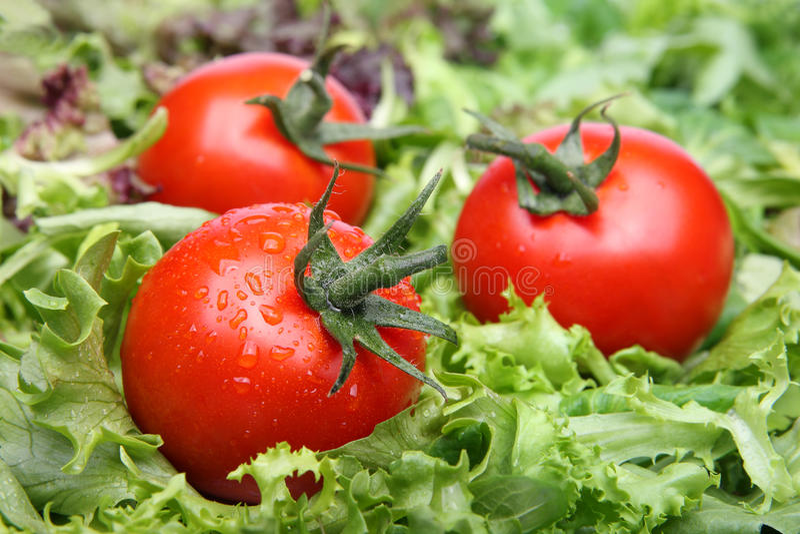 Tomates na alface imagens de stock royalty free