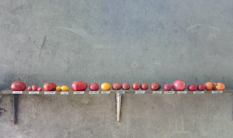 Tomates na prateleira fotos de stock