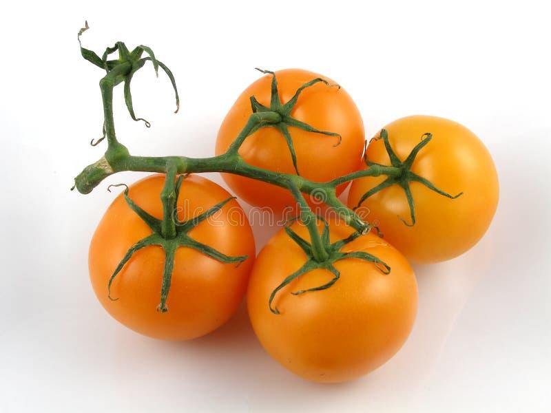 Tomates oranges image libre de droits