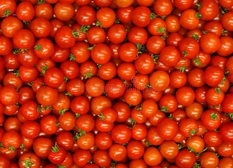 Tomates organiques rouges fraîches photos stock