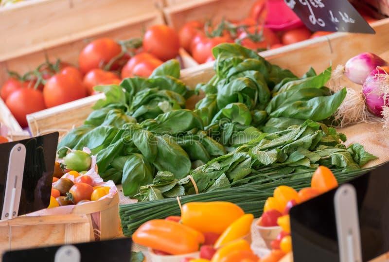 Tomates, paprikas, menta y basilicum foto de archivo libre de regalías