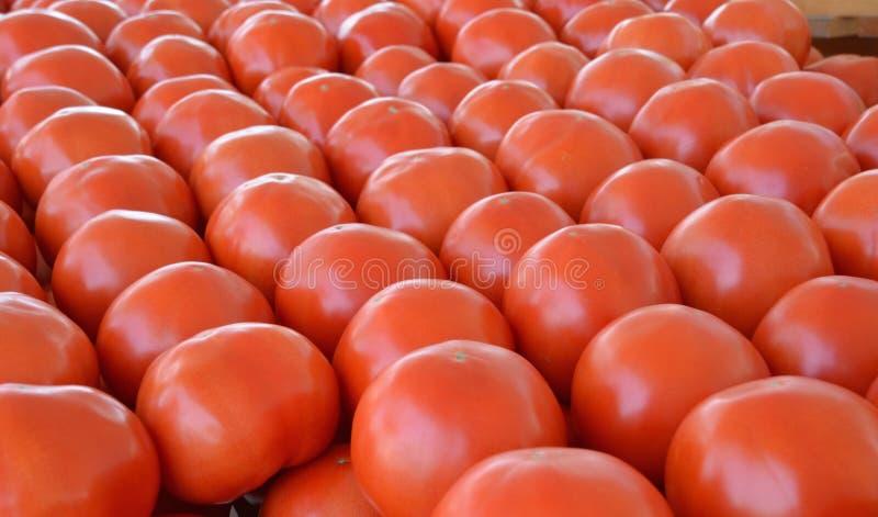Tomates de d?bardeur image stock. Image du