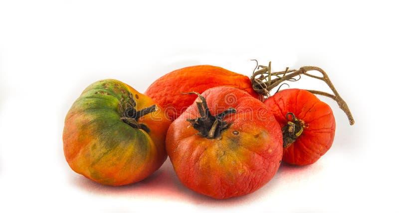 tomates putréfiées photo libre de droits
