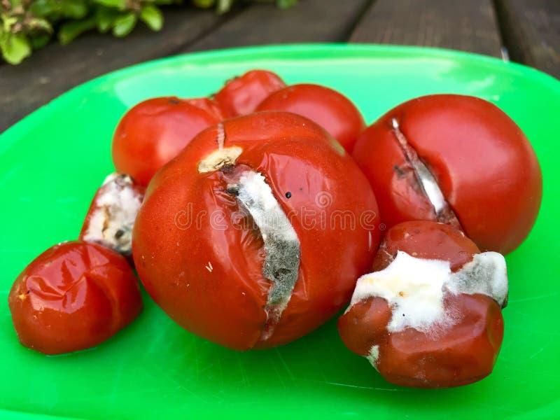 Tomates putréfiées d'un plat vert photo stock