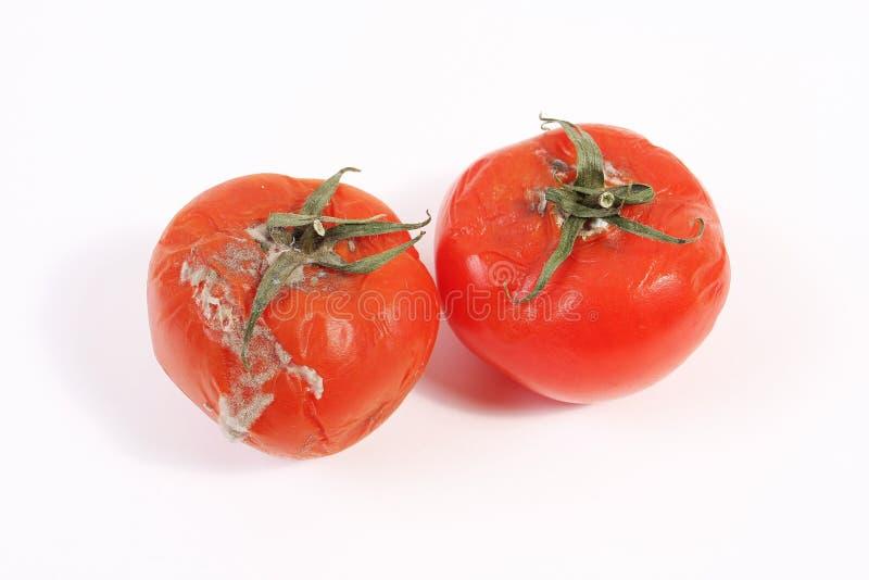 Tomates putréfiées moisies photographie stock