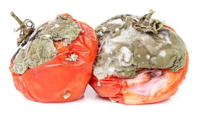 Tomates putréfiées sur le blanc photographie stock