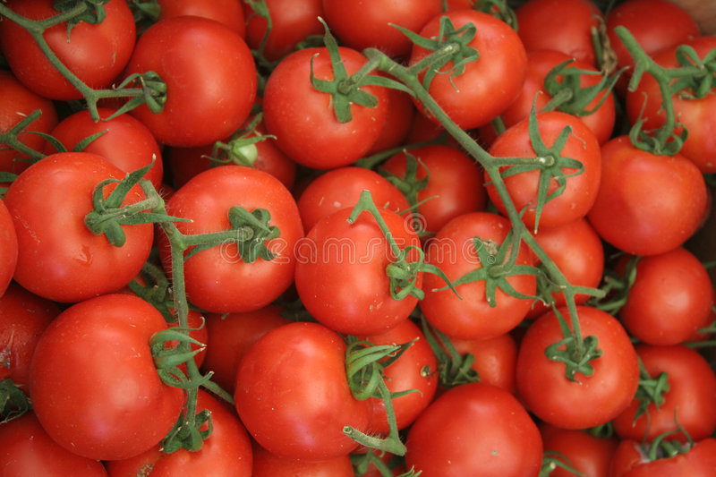 Tomates romaines photo libre de droits