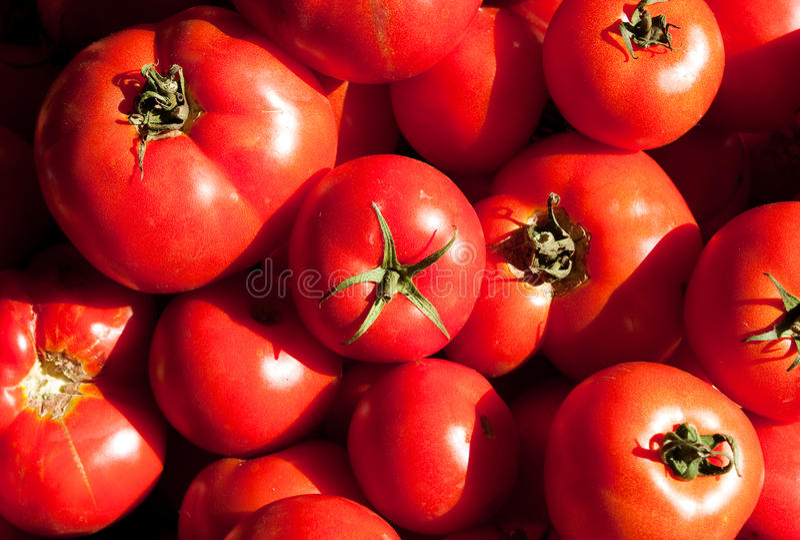 Tomates rouges fraîches photo stock