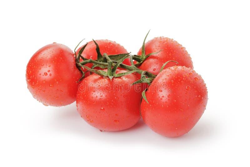 Tomates rouges humides mûres avec la branche d'isolement photographie stock