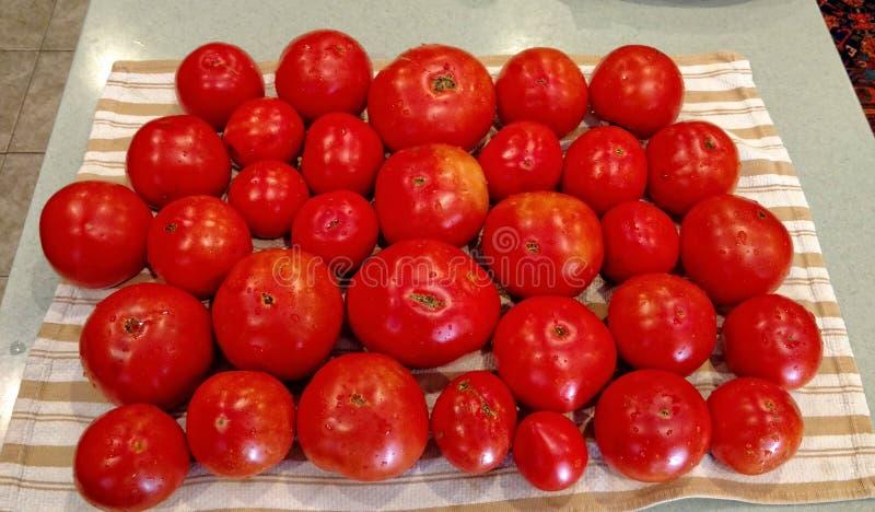 Tomates sélectionnées fraîches sur un tissu de coton photographie stock