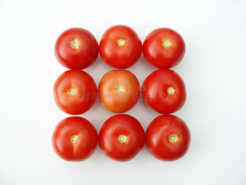 Tomates sous une forme de rectangle photographie stock libre de droits