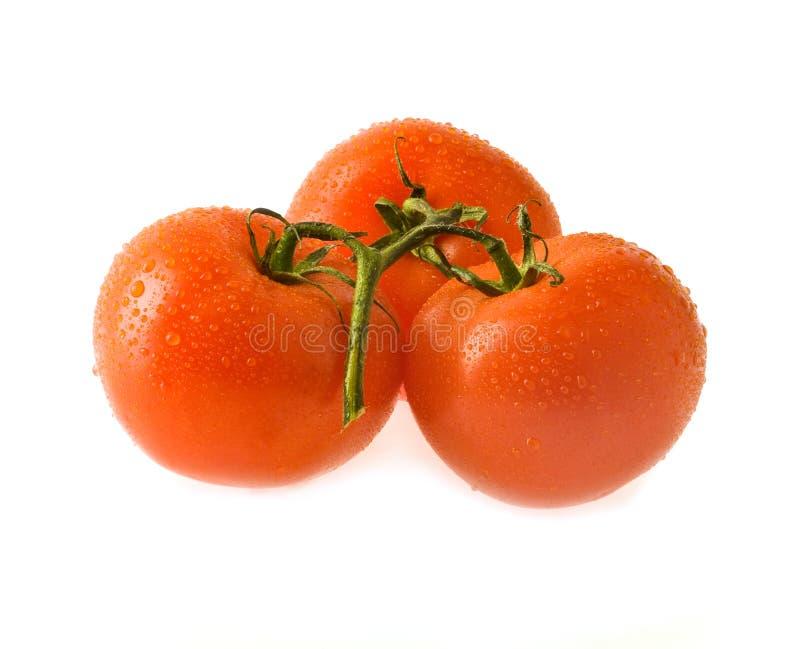 Tomates suculentos foto de stock