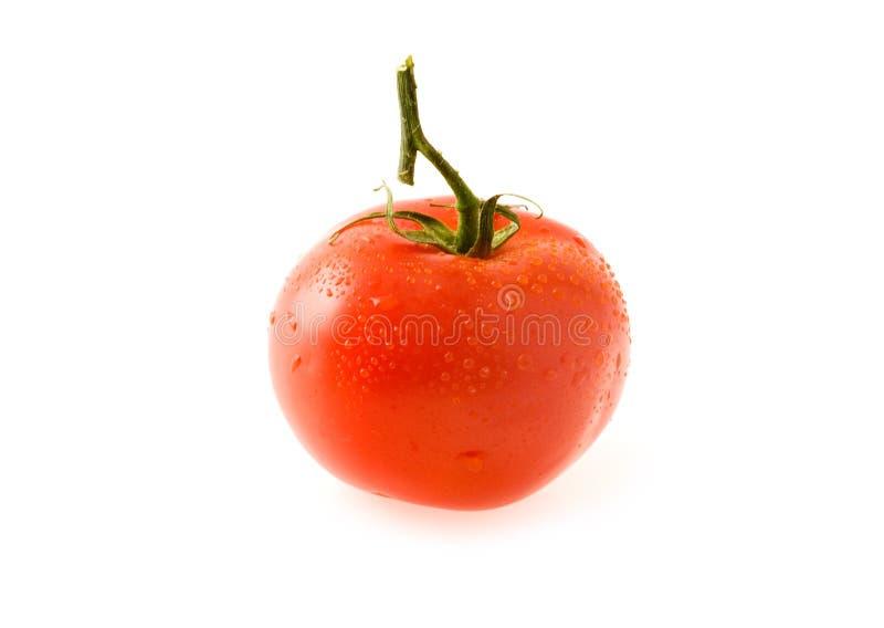 Tomates suculentos fotografia de stock