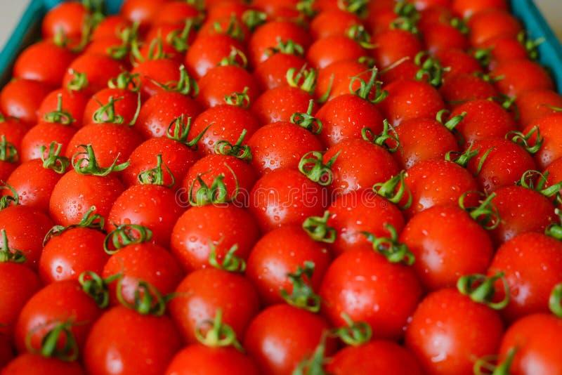 Tomates suculentos maduros na caixa imagem de stock