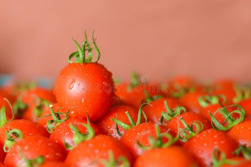 Tomates suculentos maduros fotografia de stock