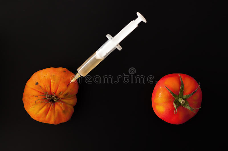 Tomates transgéniques photographie stock libre de droits