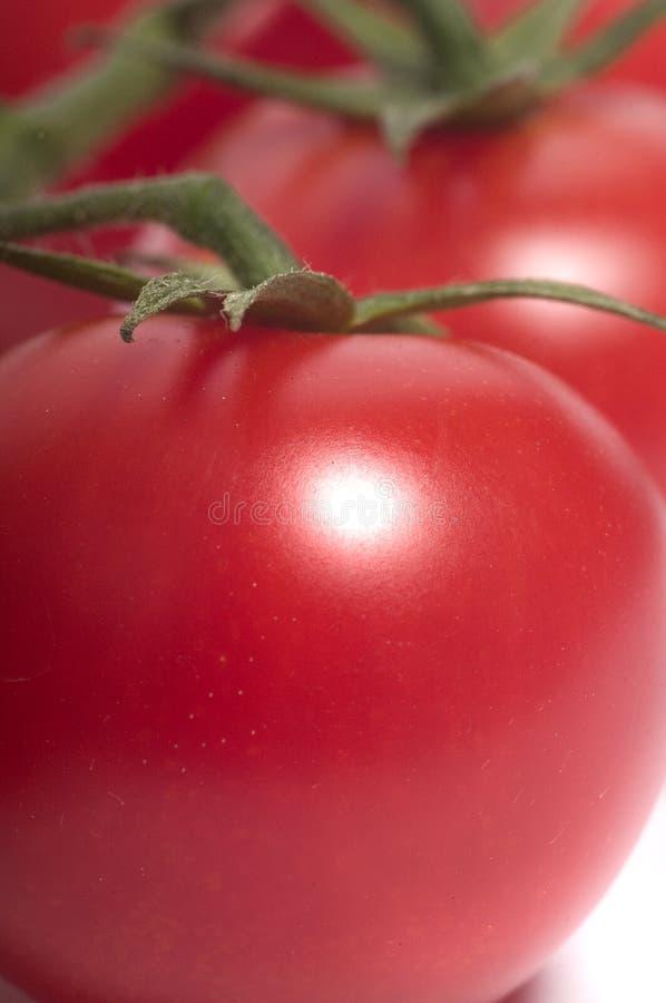 Tomates vermelhos brilhantes imagens de stock royalty free