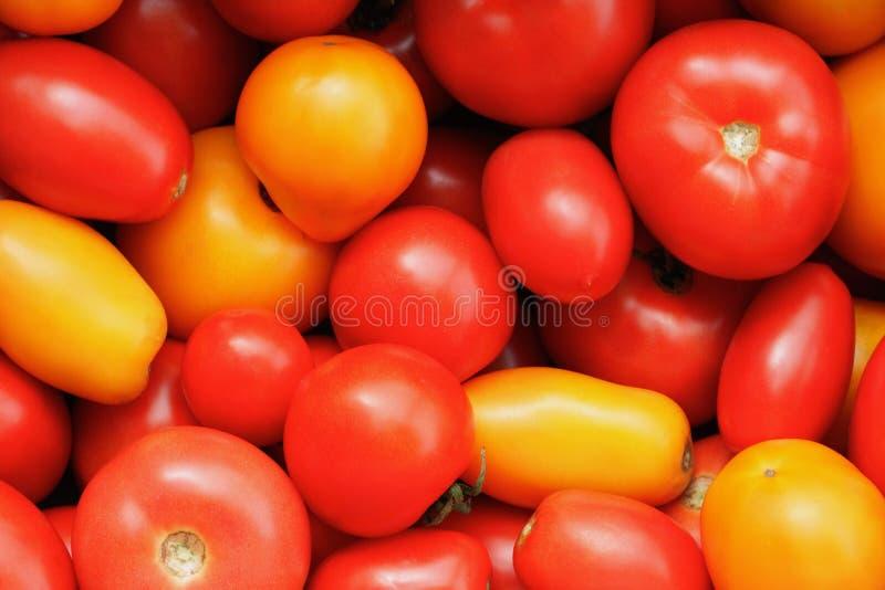 Tomates vermelhos e amarelos imagem de stock royalty free