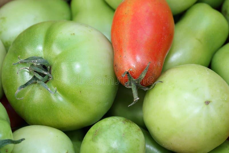Tomates vermelhos e verdes foto de stock royalty free