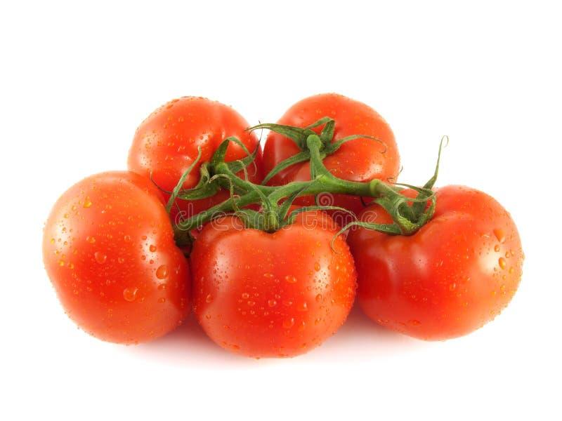 Tomates vermelhos frescos isolados no ramo (gota da água) imagem de stock royalty free
