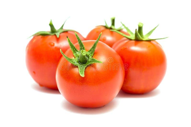 Tomates vermelhos maduros frescos no fundo branco Tomates colhidos no fundo branco foto de stock