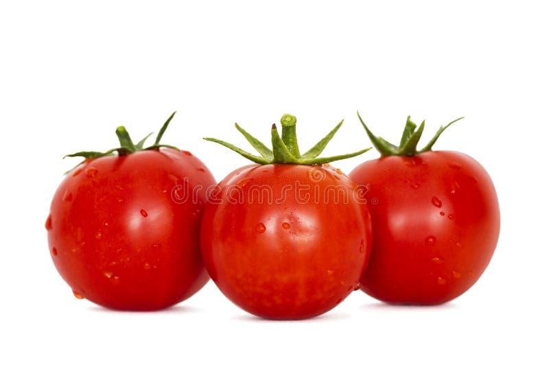 Tomates vermelhos maduros frescos no fundo branco Tomates colhidos no fundo branco foto de stock royalty free