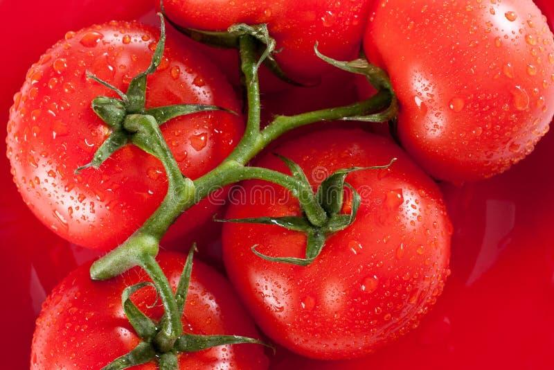 Tomates vermelhos maduros na placa vermelha fotografia de stock
