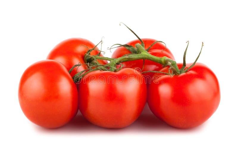 Tomates vermelhos maduros no ramo imagem de stock royalty free
