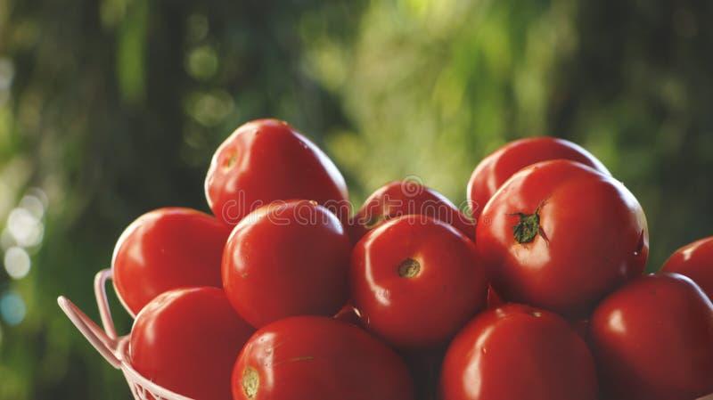 Tomates vermelhos na cesta cor-de-rosa fotos de stock royalty free