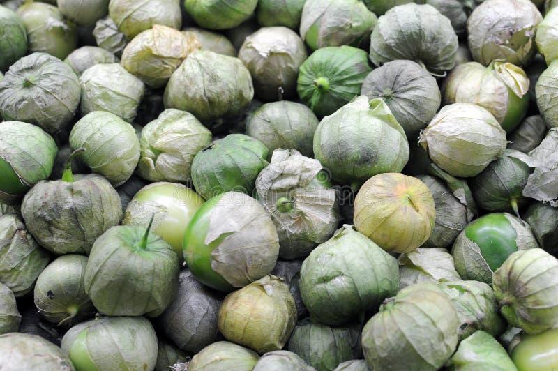 Tomatillo 免版税库存图片