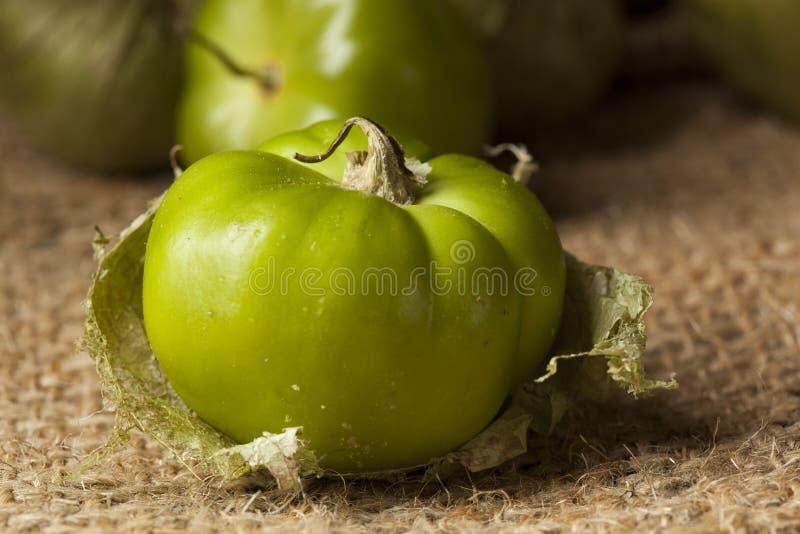 Tomatillo organique vert frais photos libres de droits