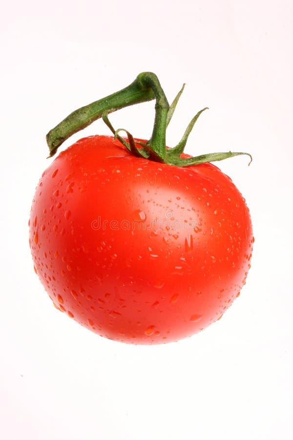 Tomato 01 stock images