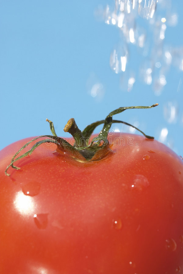 Download Tomato stock image. Image of vegetarian, green, object - 104377