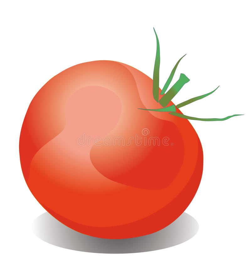 Download Tomato stock vector. Image of leaf, fruit, refreshment - 16365464