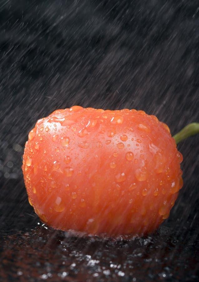 Free Tomato Stock Photography - 2321172