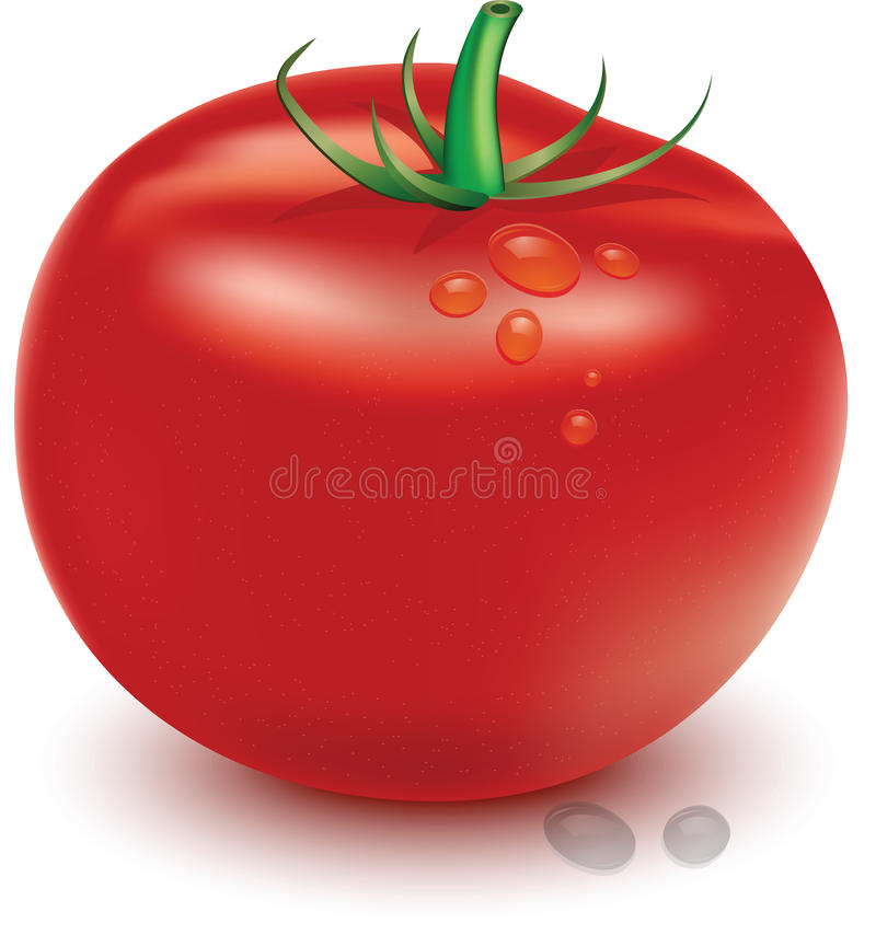 Tomato. A big and delicious tomato stock illustration