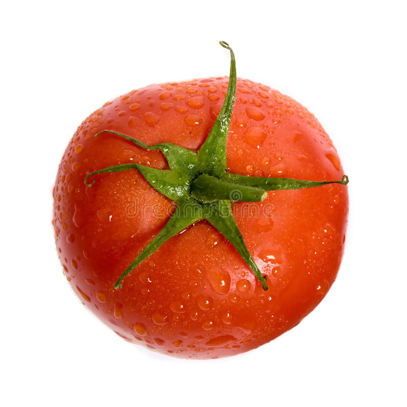 Tomato. The close up view of dewed tomato royalty free stock photo