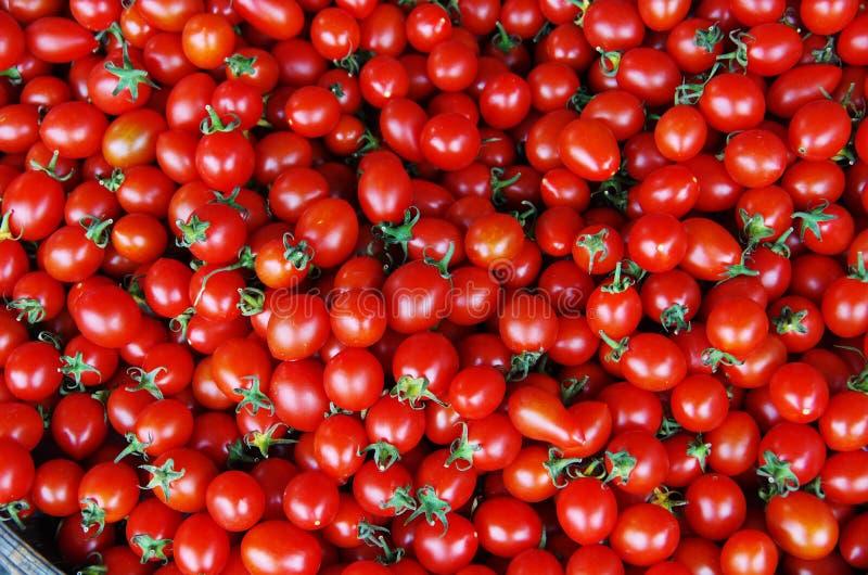 Download Tomato stock photo. Image of carotene, taste, lycopersicum - 29009130