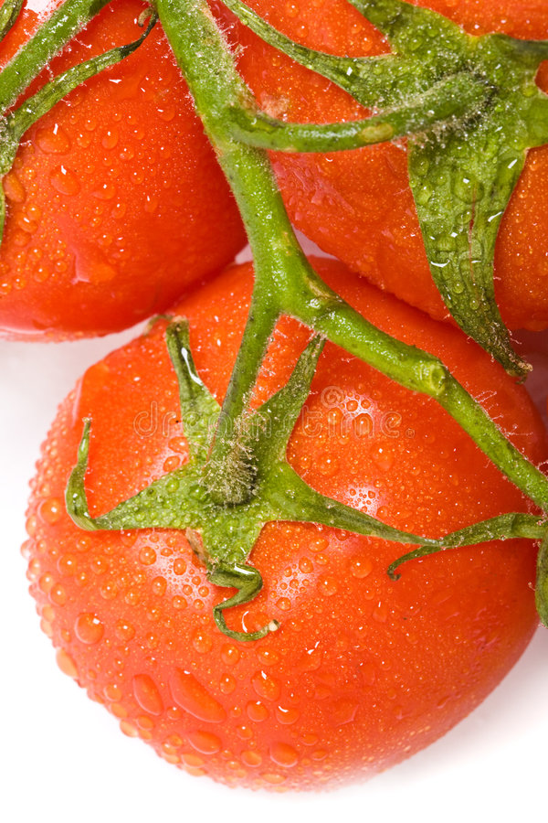 Tomato. The close-up view of the dewed tomato royalty free stock images