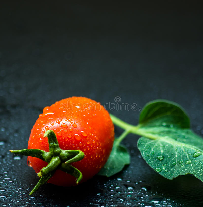 Free Tomato Royalty Free Stock Images - 60101289