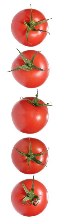 Tomato border stock image