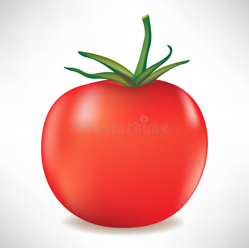 Tomato with branch