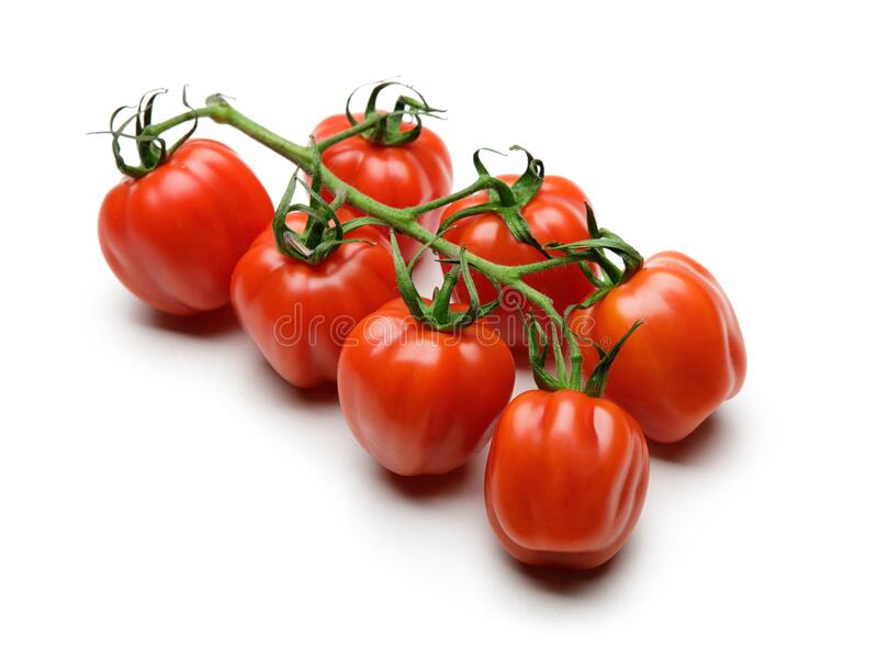 Tomato. Tomato branch. Tomatoes isolated on white stock photography