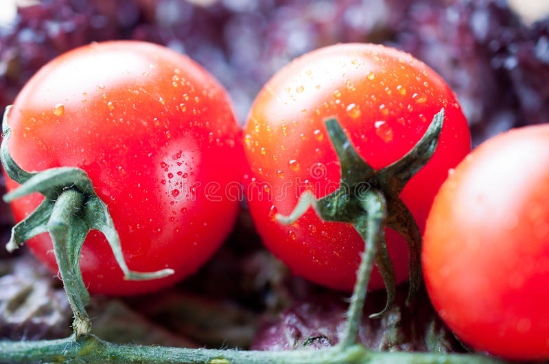 Tomato Brunch Royalty Free Stock Photo