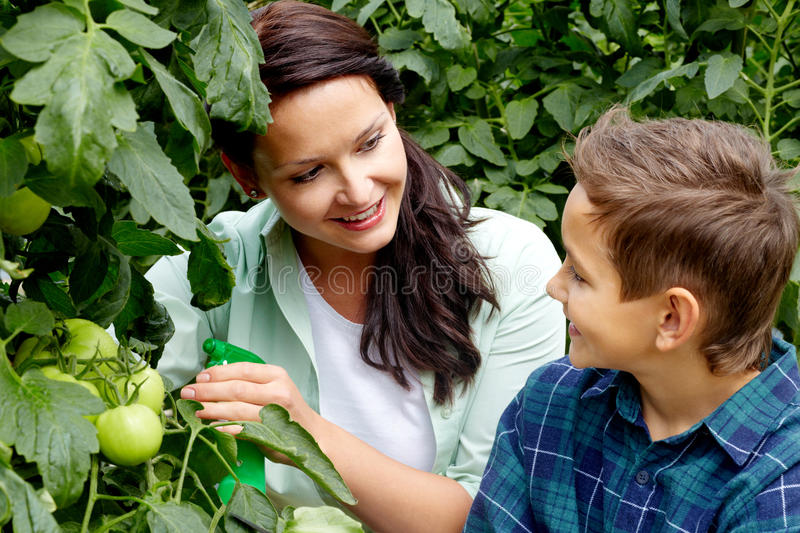 Download Tomato care stock image. Image of cute, happy, offspring - 27880281