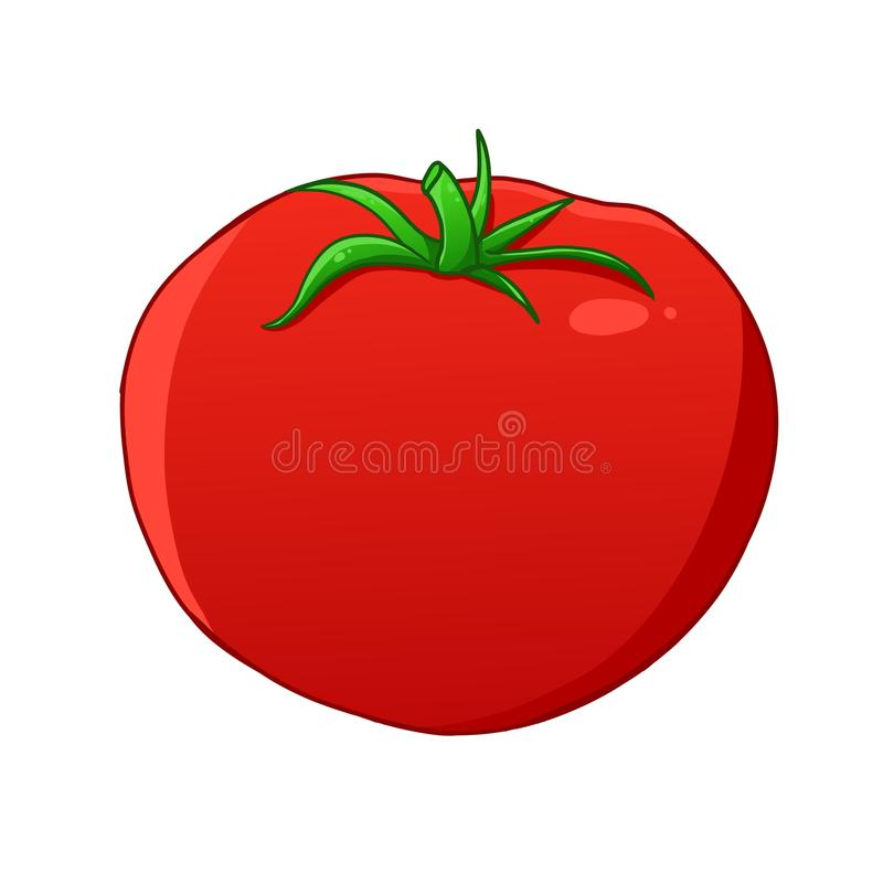 Tomato. Illustration of a red tomato that has vitamins and healthy vector illustration