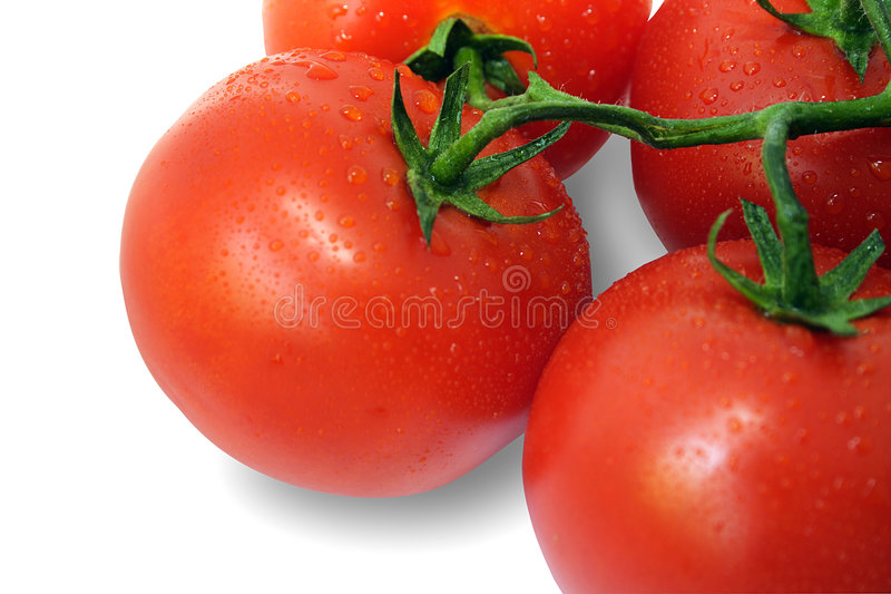 Tomato  (with Clipping Path)